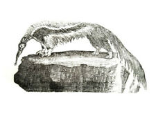 The Anteater print from original Thomas Bewick block made in the early 1800's