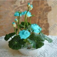 10 Graines Fleurs de LOTUS Sacré TURQUOISE Cultiver en intérieur ou BASSIN