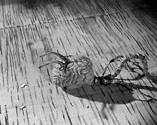 1958's FIEND WITHOUT A FACE skittering brain b/w 6x10 scene