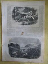 Vintage Print,PANTHER HUNTING,Harpers,1859