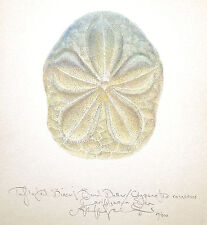 Ocean Seashell BISCUIT SAND DOLLAR  original SIGNED limited edition