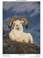 Mountain Peral by Tom Mansanarez Bighorn Sheep Print 5x7