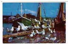 Postcard: Sea Gulls Feasting on Fish Scraps, Cape Cod, Massachusetts, USA