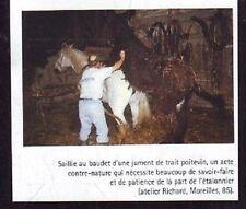2003  --  SAILLIE AU BAUDET D UNE JUMENT DE TRAIT A MOREILLES  VENDEE  U263