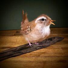 Wren, Needle Felted Bird, Faux Taxidermy - Needle Felted Animal