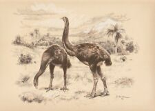 Prehistoric New Zealand 13' bird  DINORNIS Sepia Print By Z Burian 1963 VF 9x13""