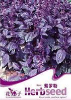 FD1265 Chinese Herb Purple Sweet Basil Seed Ocimum Gratissimum ~1 Pack 50 Seeds~