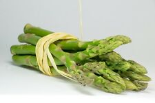 Vegetable Seed ASPARAGUS- Mary Washington Asparagus Officinalis- Pack of 20 Seed