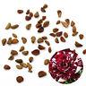 30PCS White Rare Dragon Rose Flower Seeds Garden Plants Seeds Flower Seeds TR