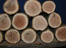 Two (2) Premium Red Oak Shiitake Oyster Mushroom Log Mushrooms Plugs Spawn