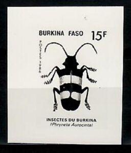 Photo Essay, Burkina Faso Sc775 Insect, Phryneta aurocinta.