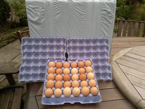 EGG TRAYS BLUE 10 TRAYS (HOLDS 30 EGGS) SUITABLE FOR CHICKEN MEDIUM/LARGE EGGS
