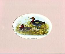 OVALE-montato Chromo Litho Bird Print-Color Foglia Di Tè & American color foglia di tè-Wyman & Sons (c1870)