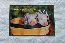 Old 1999 Animal Postcard Bushel of Pork Pigs Piglets in a Basket All Dressed Up