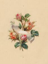 A. Ziegler (attr.): Rose (Rose struzzo). - Acquerello/guazzo per 1900