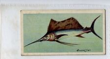 (Jd7961) PLAYERS,FISHES OF THE WORLD,SWORD-FISH,1903,#