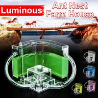 Luminous Acrylic Ant Nest Farm House Ants Work Educational Formicarium Feeding