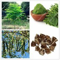 10pcs/bag Moringa oleifera tree Edible seeds DRUMSTICK TREE bonsai potted plant