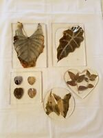 Folk Art Framed Botanical Specimens Leaves Under Plastic  - counter pot holders