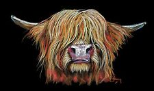 HIGHLAND COW PRINT box canvas LARGE of Original Painting 'CHARMER' by SHIRLEY M