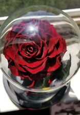 Enchanted Forever Real Rose In Glass Dome