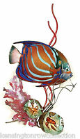 WALL ART - BLUE RING ANGELFISH WITH CORAL METAL WALL SCULPTURE