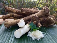 HORSERADISH ROOT 400 grams