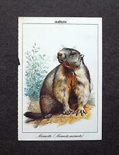 K527- Advertising Pubblicità - ANIMALI , MARMOTTA , SCHEDA DIDATTICA