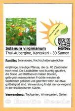 Samen Thai-Tomate Solanum virginianum Aubergine Wohlriechend /& lecker Thai