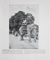 1896 London Stampa Con (Testo Zoological Giardini Equitazione Elefanti