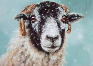 Sheep Xmas Card- Blank/ Greeting -animal painting by Alison Armstrong -Swaledale