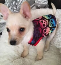 Chihuahua Tea Cup Size (xsmall Size) Dog Clothes Rainbow Colour Skulls T Shirt
