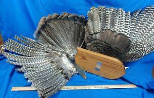 Large Wall Mount Taxidermy Turkey Feathers Fan Beard VTG Wood Plaque Trophy Date