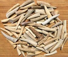 """48 Pack - Deer Antler Tine Tips, Points, Pendants - Size 1.5 to 2.5"""" Grade A"""