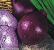 Onion Red Brunswick  Vegetable Late maturing medium to large bulbs 140 seeds