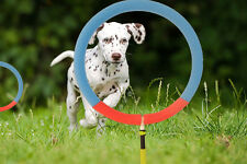 Dog Agility Training Hoop Jump Indoor Outdoor Home Professional Equipment. M/L