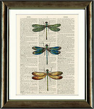 Old Antique Dictionary page Art Print - 3 Dragonflies Upcycled page Print