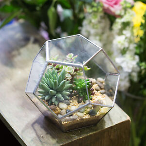 Terrarium Glass Planter Pot Box Ball Shape Plants planter  for Christmas Presen