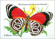 IMAGE CARD Callicore Clymena Diaethria eighty-eights Papillon Butterfly 60s