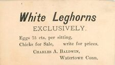 """White Leghorns, Exclusively"", Charles A. Baldwin, Watertown, Connecticut CT"