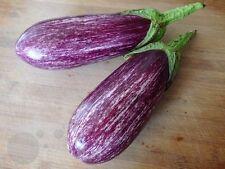 Long purple strip Eggplant seeds aubergine Vegetable 20 seed organic heirloom
