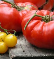 Shuntukski Velikan Heirloom Russian Beefsteak Tomato : 25 Seeds