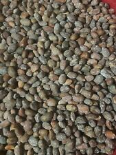 New Mexico Pinon Nuts in the Shell Roasted and Salted 1 lb bag