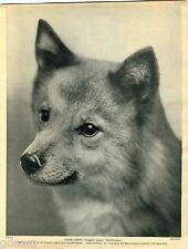 1930 Book Plate Print Dog Finsk Spets RARE Hallo Ukinpoika Sarumcote Kiho Peikho