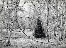 """John Sexton""""Aspen Dream, Near Ashcroft, Colorado"""", 1989 11x14 Photograph, Signed"""