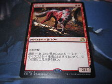Scourge Wolf Red Shadows Over Innistrad Rare Japanese Card Mint MTG