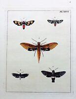 VERY RARE 1770 Dru DRURY Vol. I FIVE MOTHS SPHINX Handcolored/Copper Plate XXVI