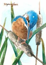 ACEO Limited Edition - Kingfisher on a cattail