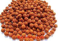 Rudraksha Rudraksh 5 Mukhi Loose 6mm Beads Yoga Meditation Wholesale Lot of 1001