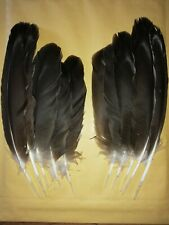10 Harris Hawk  Feathers , Arts Crafts, Fly Tying, Native American,Millinery
